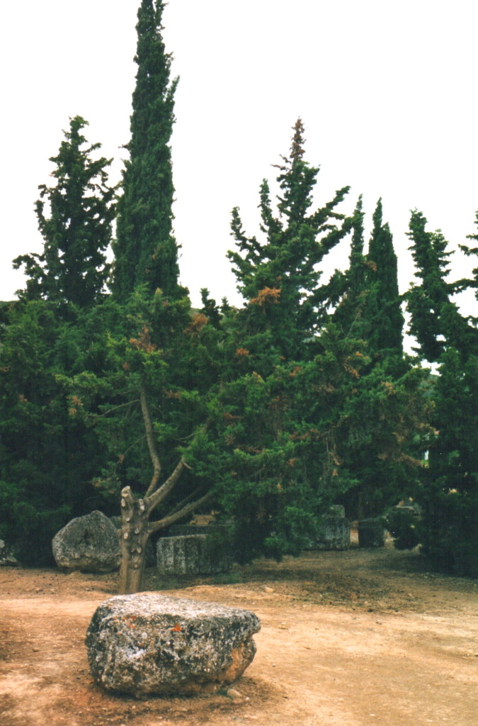 The sacred cypress grove in the sanctuary