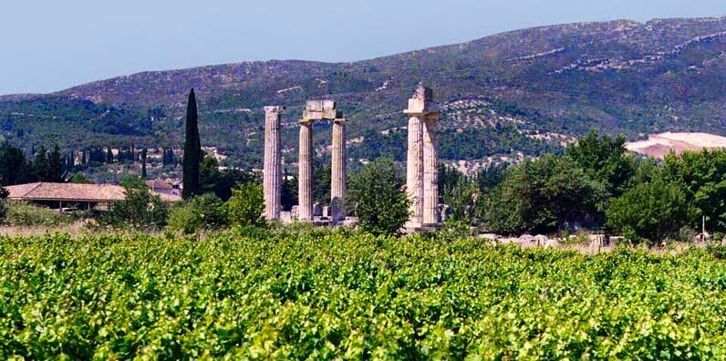 View of the Temple of Zeus from the surrounding vineyards