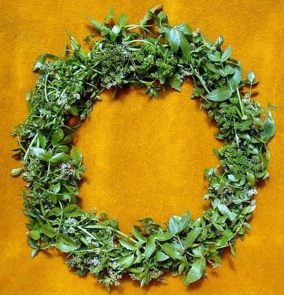 A crown of wild celery - the victory wreath of winners at the Nemean Games